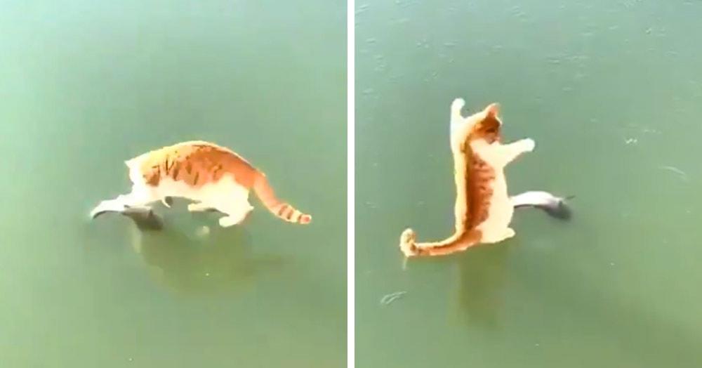 Видео недели: рыжий кот изо всех сил сражается со льдом, пытаясь схватить замёрзшую рыбку. А лёд не отдаёт!