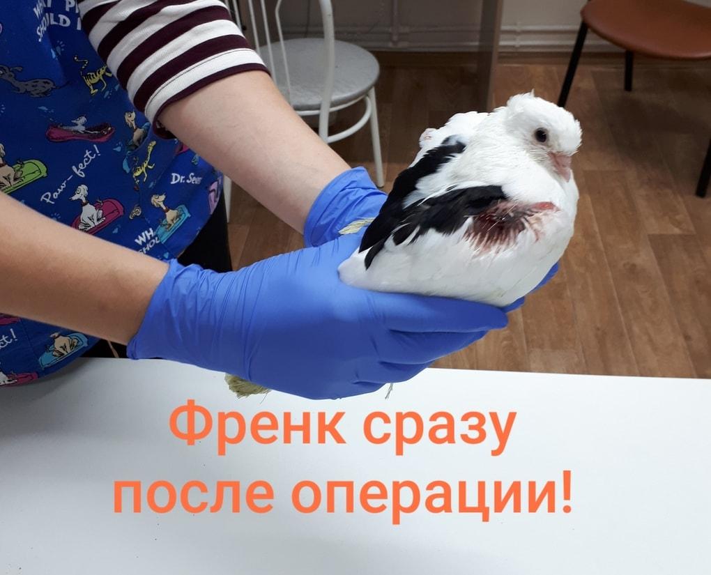 Пациент из Омска сам пришёл к врачу и даже постучался. Почему мы удивлены? Потому что он — голубь 12