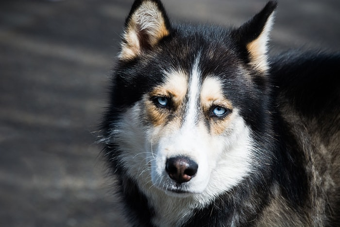 Sled Dogs Have Been Banned From Antarctica In 1994