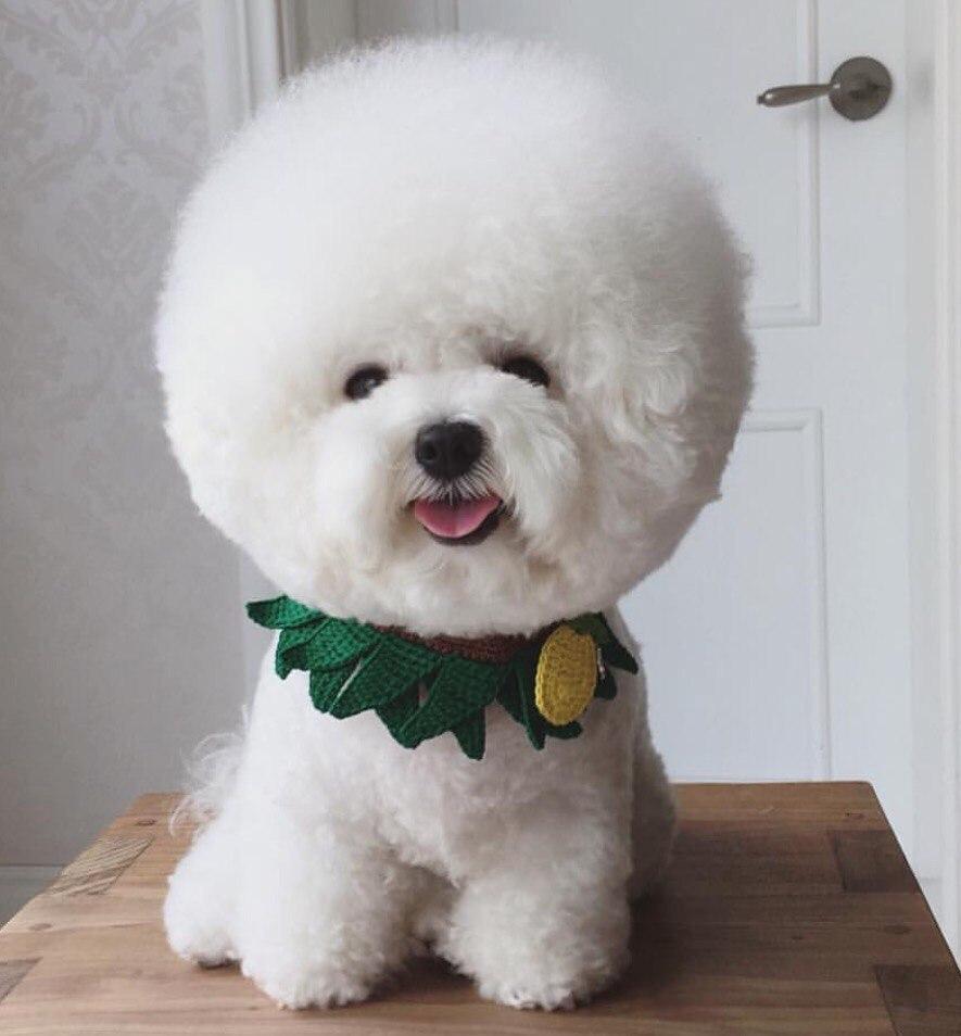 10 самых маленьких пород собак в мире, которых сложно найти, легко потерять и невозможно не любить 8