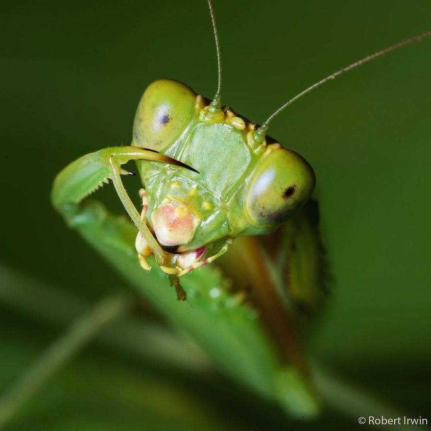 New-Wildlife-Photography-Robert-Irwin