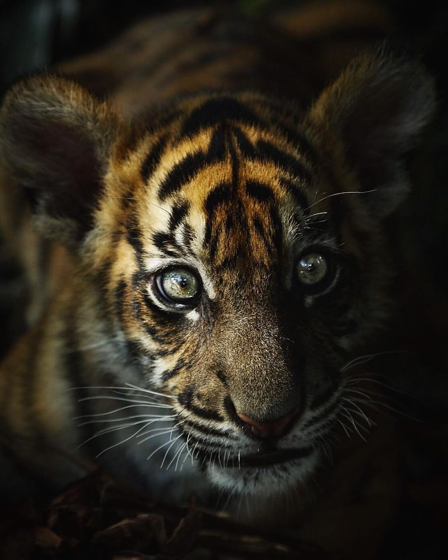 New-Wildlife-Photography-Robert-Irwin