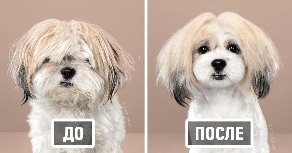 Фотограф показала собак до и после стрижки в японском стиле, и каждая из них стала яркой личностью