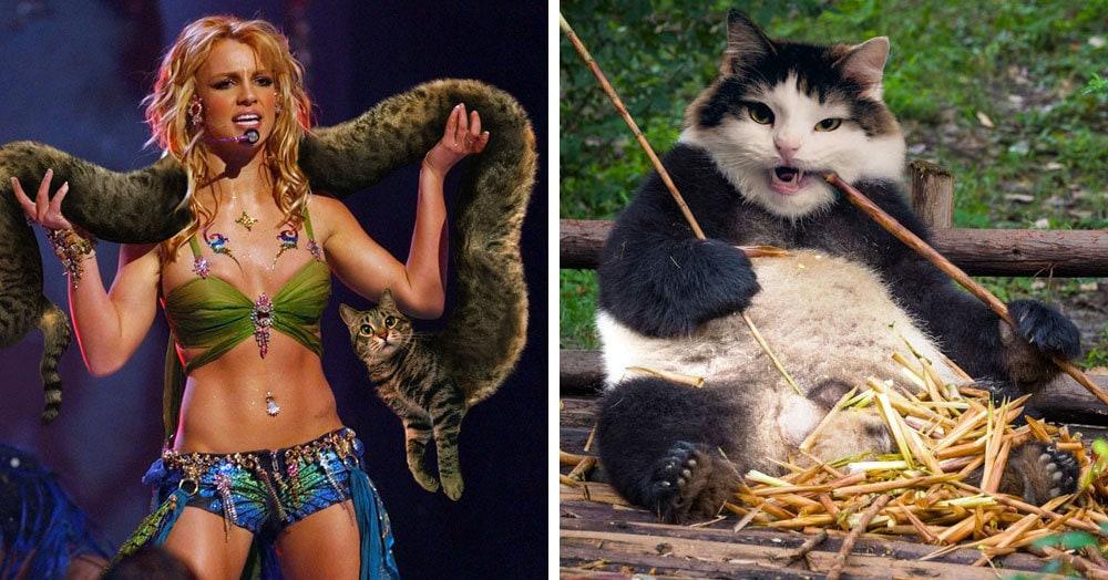Девушка фотошопит своих котов, превращая их в неведомых зверей, и на это невозможно смотреть без улыбки