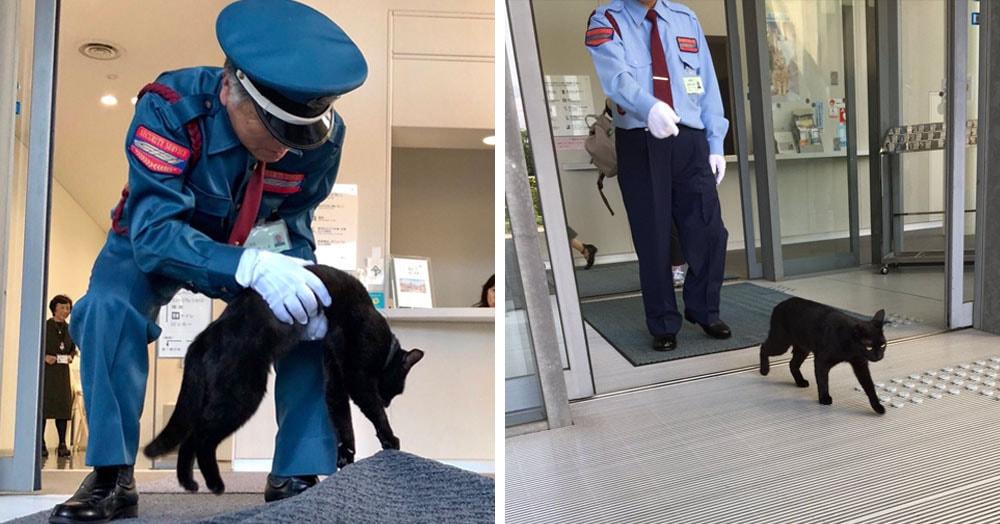 Коты уже два года осаждают японский музей и пытаются туда зайти. И их война с охраной — самая милая на свете