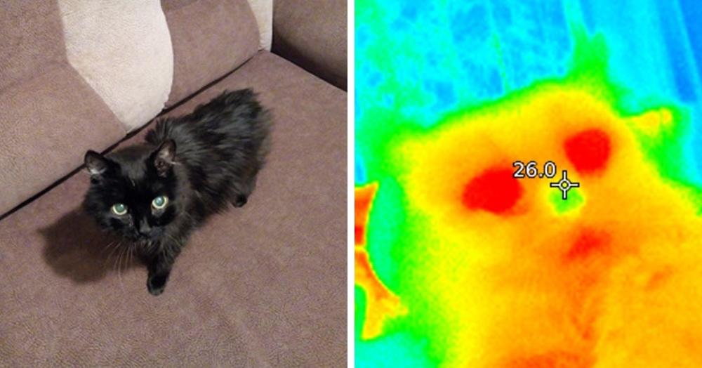Пользователь Пикабу показал, как выглядят привычные вещи, если смотреть на них через тепловизор