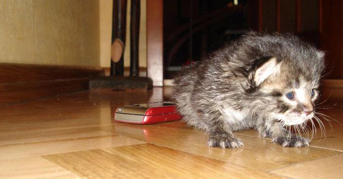 Кошечка застряла в школьном подвале и умирала, но её спасла ученица. Теперь киса настоящая королева!