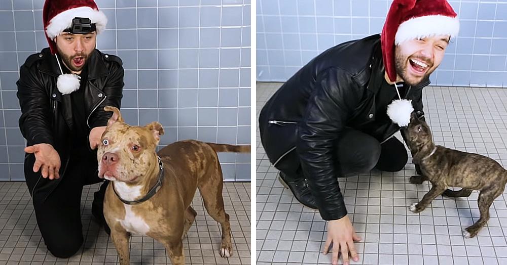 Американский иллюзионист показывает фокусы собакам из приюта, и их реакция бесценна