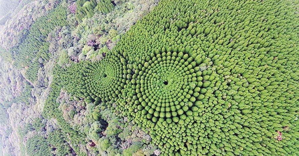В японском лесу появились странные круги. И это не дело рук инопланетян, а эксперимент учёных