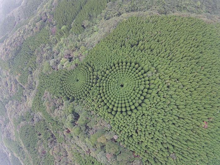 В японском лесу появились странные круги. И это не дело рук инопланетян, а эксперимент учёных 1