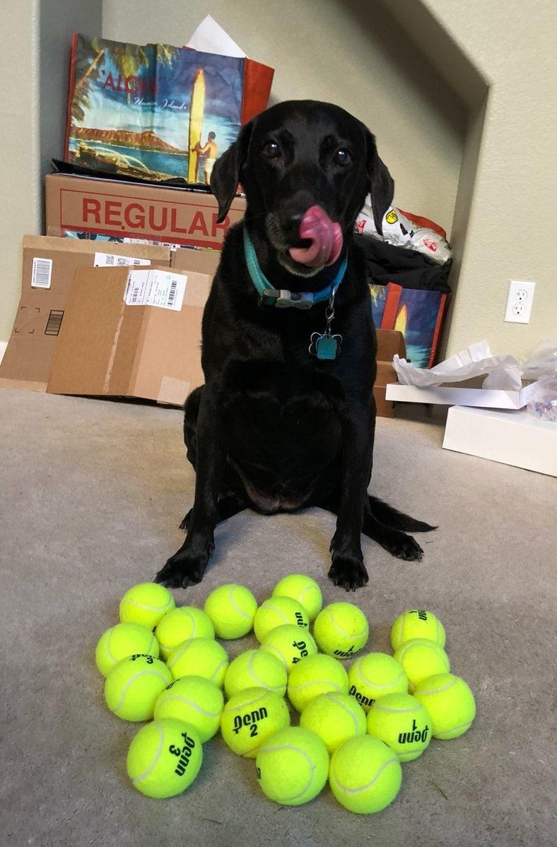 Хозяйка решила подарить своей собаке 24 мяча и посмотреть на её реакцию. Счастью не было предела! 10