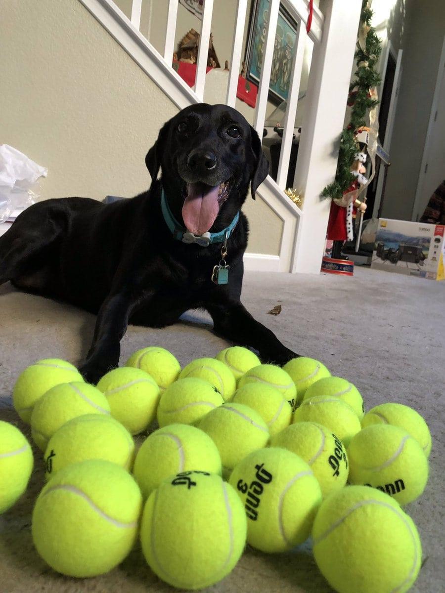 Хозяйка решила подарить своей собаке 24 мяча и посмотреть на её реакцию. Счастью не было предела! 11