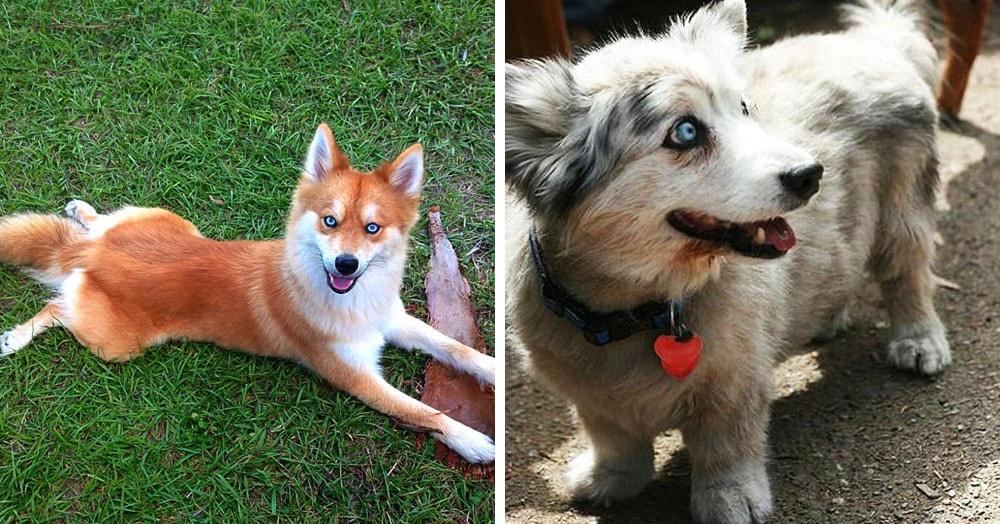 16 собак-метисов, которые взяли лучшее от своих родителей и получились настоящими очаровашками