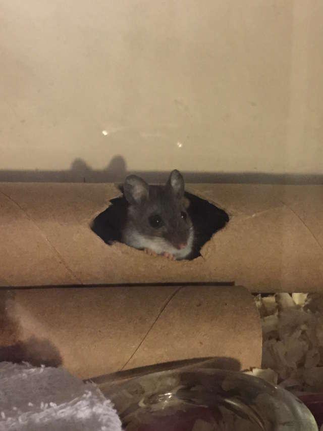 Девушка попыталась спасти мышонка, которого посчитали мёртвым. Усилия того стоили! 5