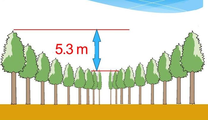 В японском лесу появились странные круги. И это не дело рук инопланетян, а эксперимент учёных 7