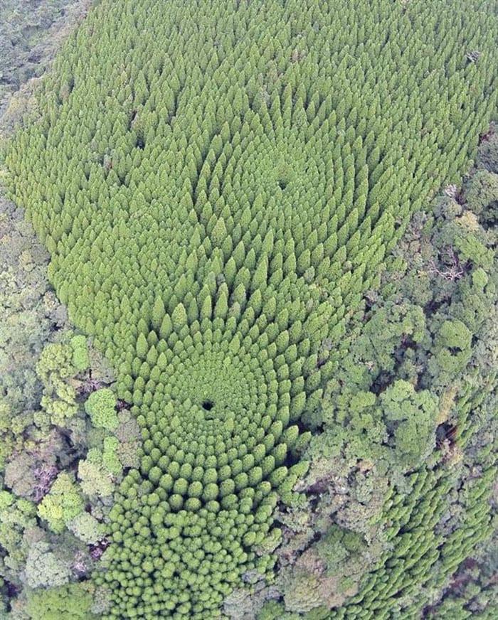 В японском лесу появились странные круги. И это не дело рук инопланетян, а эксперимент учёных 5