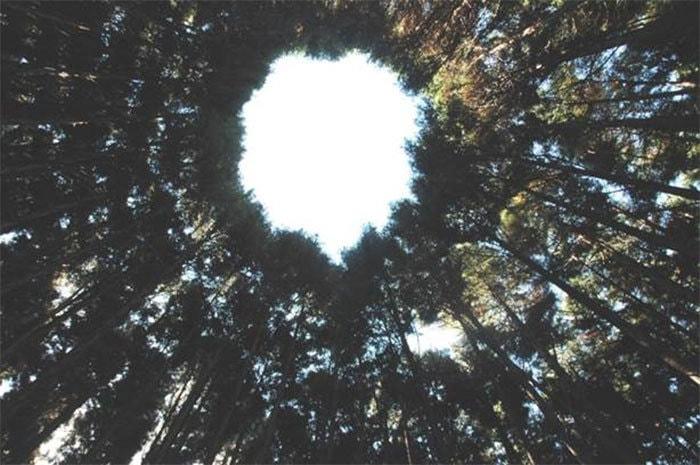 В японском лесу появились странные круги. И это не дело рук инопланетян, а эксперимент учёных 8
