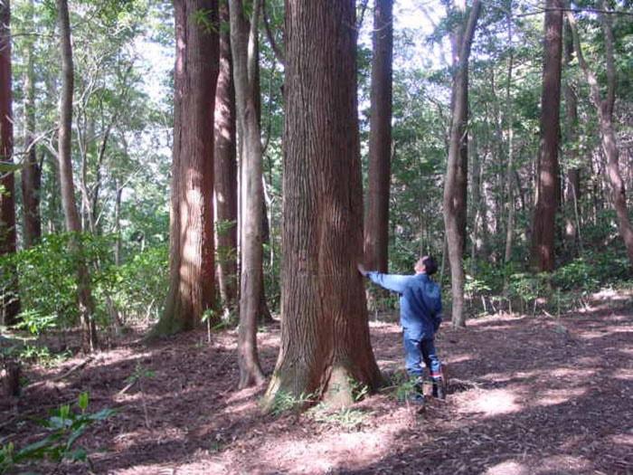 В японском лесу появились странные круги. И это не дело рук инопланетян, а эксперимент учёных 2