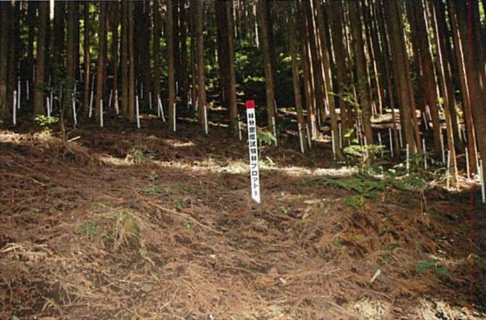 В японском лесу появились странные круги. И это не дело рук инопланетян, а эксперимент учёных 4