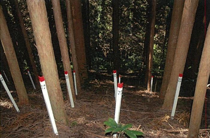 В японском лесу появились странные круги. И это не дело рук инопланетян, а эксперимент учёных 3