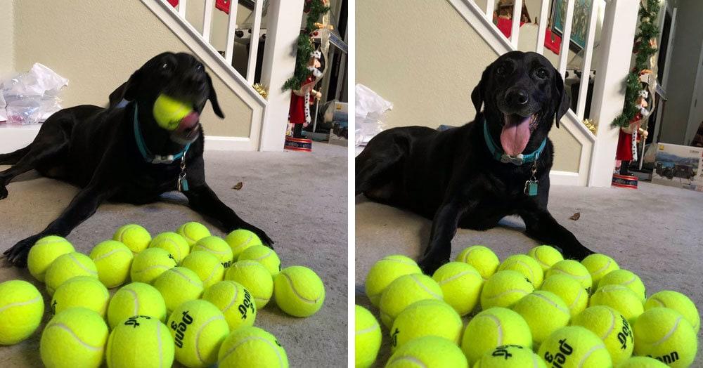 Хозяйка решила подарить своей собаке 24 мяча и посмотреть на её реакцию. Счастью не было предела!