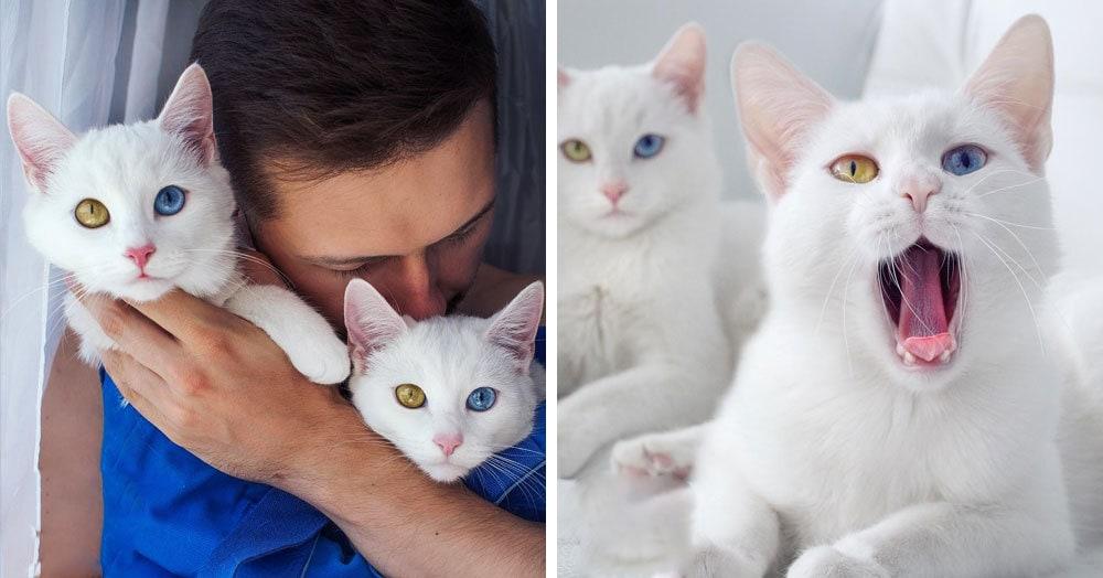 Природа наградила беспородных кошек-близняшек невероятными глазами, и они покоряют всех и каждого