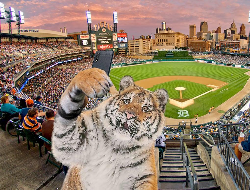 Тигр так игрался в снегу, что стал героем битвы фотошоперов. Ведь его морда хороша не только в лесу 3