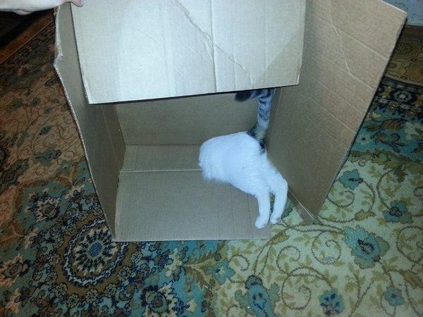 Это еще раз доказывает, что коты умеют телепортироваться и застревать в текстурах.