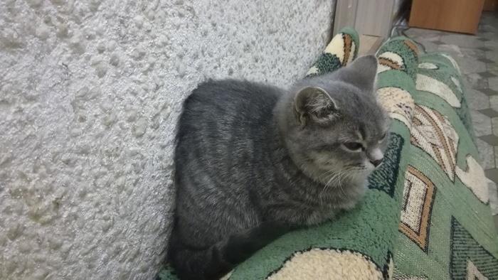 Моя кошка лежит так, как-будто застряла в текстурах Кот, Текстуры