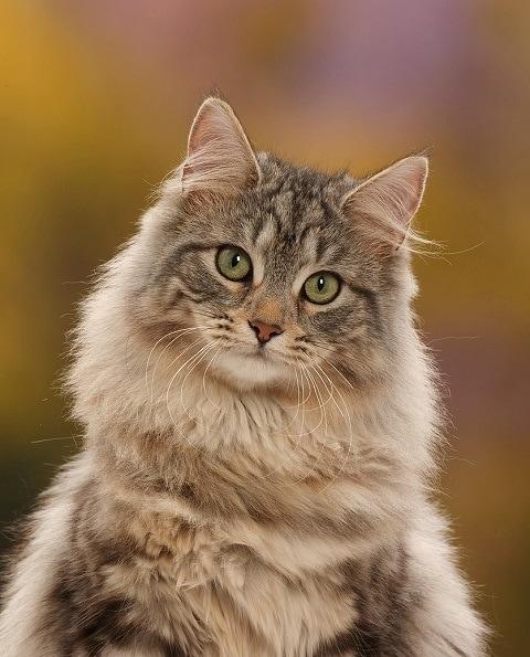 45766 1 - Фотограф показал взросление кошки в ускоренном виде, и вот как выглядит путь из детства в матёрость