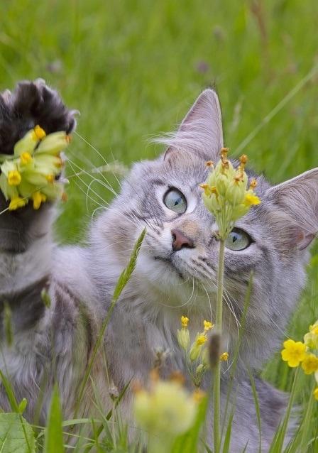 46073 - Фотограф показал взросление кошки в ускоренном виде, и вот как выглядит путь из детства в матёрость