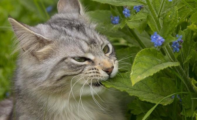 46076 - Фотограф показал взросление кошки в ускоренном виде, и вот как выглядит путь из детства в матёрость