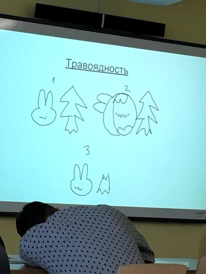 Презентация года Презентация, Минимализм, Длиннопост, Биология