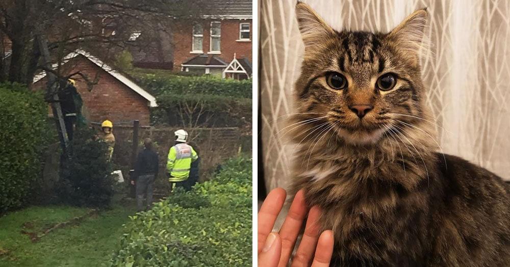 Кот залез на дерево и застрял, хозяйка полезла его спасать и тоже застряла. Потом приехали пожарные