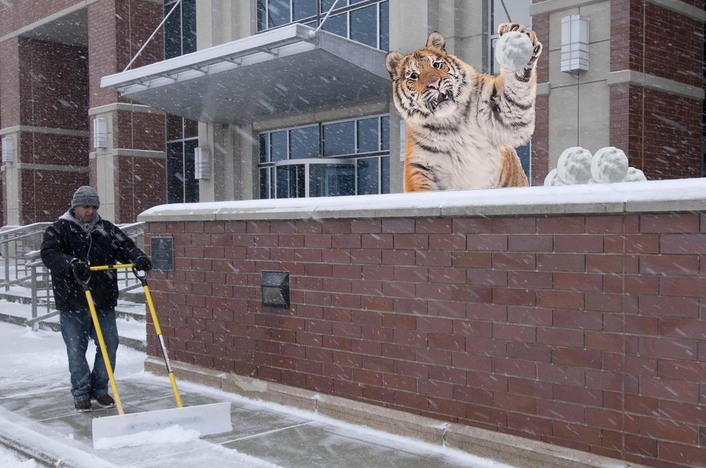Тигр так игрался в снегу, что стал героем битвы фотошоперов. Ведь его морда хороша не только в лесу 9