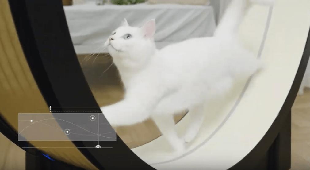 Корейцы придумали умный тренажёр для толстых котов. Осталось убедить пушистых, что они хотят худеть 5