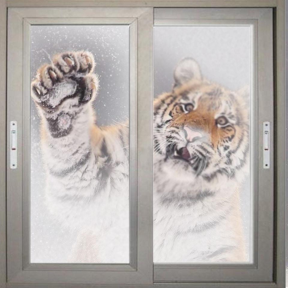 Тигр так игрался в снегу, что стал героем битвы фотошоперов. Ведь его морда хороша не только в лесу 10