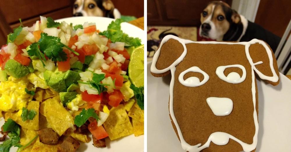 Пёс так грустно смотрел на еду, что хозяин начал его снимать. И теперь мы все можем ощутить его боль