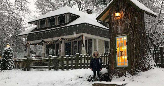 Женщина превратила 110-летнее мёртвое дерево в маленькую библиотеку, восхитив соседей и вообще всех