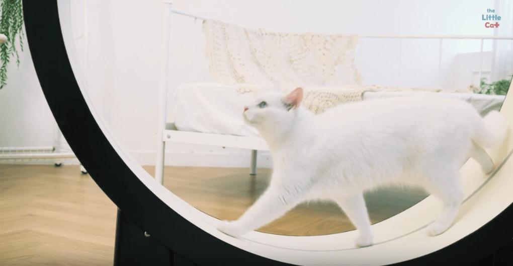Корейцы придумали умный тренажёр для толстых котов. Осталось убедить пушистых, что они хотят худеть 1