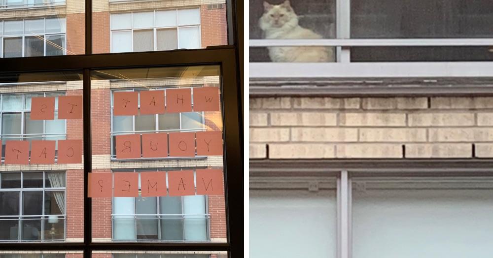 Женщина решила познакомиться с котом, которого часто видела в окне. Ей помогли стикеры и смекалочка