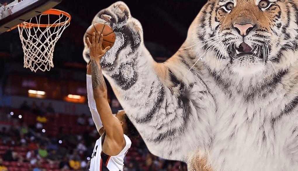 Тигр так игрался в снегу, что стал героем битвы фотошоперов. Ведь его морда хороша не только в лесу 11