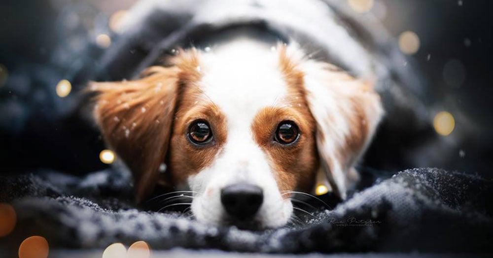 Девушка из Австрии фотографирует собак, показывая их уникальный характер и невероятную красоту