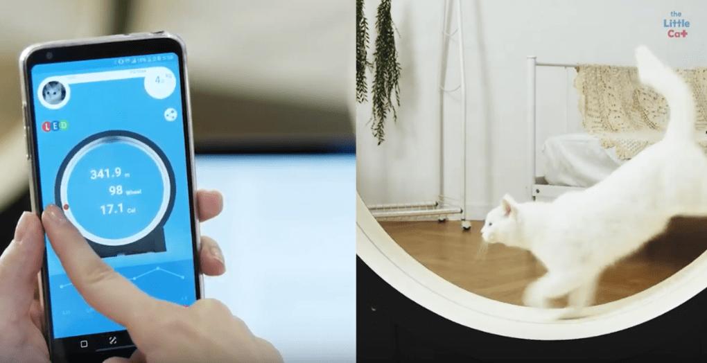 Корейцы придумали умный тренажёр для толстых котов. Осталось убедить пушистых, что они хотят худеть 4