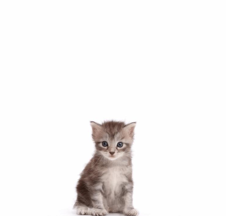 screenshot 1 7 - Фотограф показал взросление кошки в ускоренном виде, и вот как выглядит путь из детства в матёрость