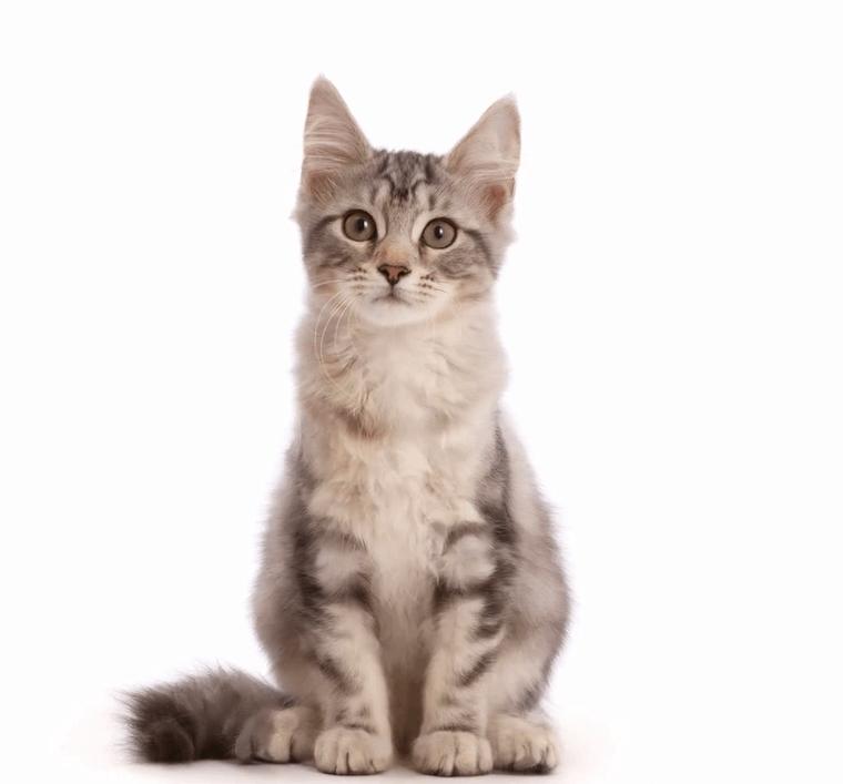 screenshot 7 4 - Фотограф показал взросление кошки в ускоренном виде, и вот как выглядит путь из детства в матёрость