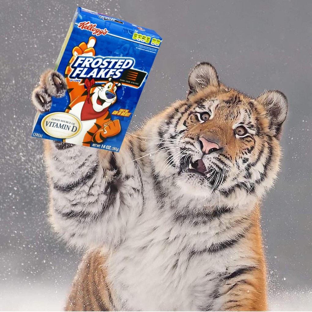 Тигр так игрался в снегу, что стал героем битвы фотошоперов. Ведь его морда хороша не только в лесу 8