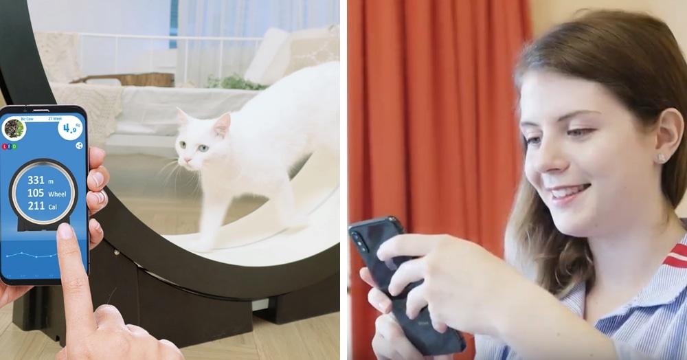 Корейцы придумали умный тренажёр для толстых котов. Осталось убедить пушистых, что они хотят худеть