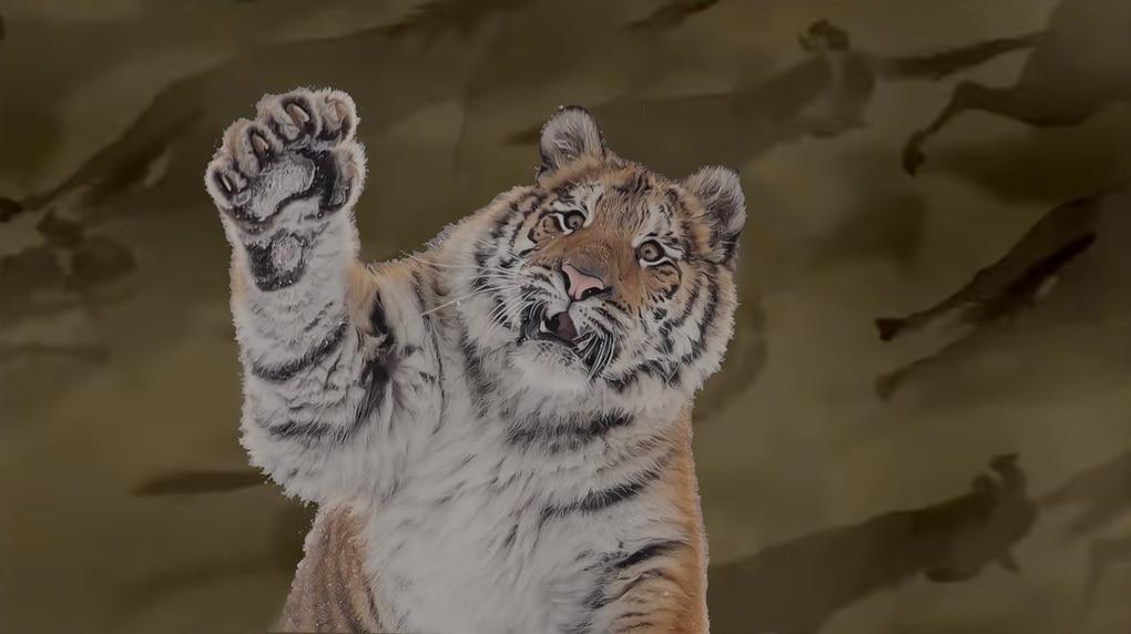 Тигр так игрался в снегу, что стал героем битвы фотошоперов. Ведь его морда хороша не только в лесу 14