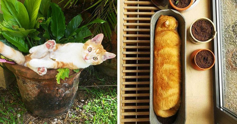 20 снимков котиков в горшках, доказывающих, что коты — цветы жизни, которые не нужно поливать